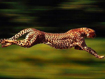 Velocidade empreendedora