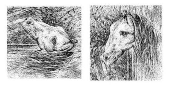 paradigma-cavalo-ou-sapo