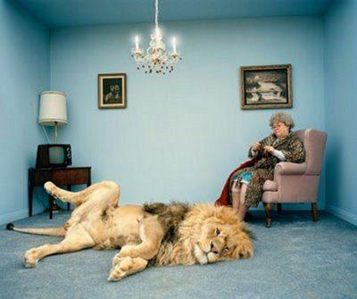 Leão de Estimação