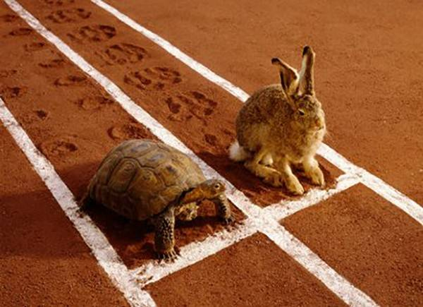 the hare and the turtle