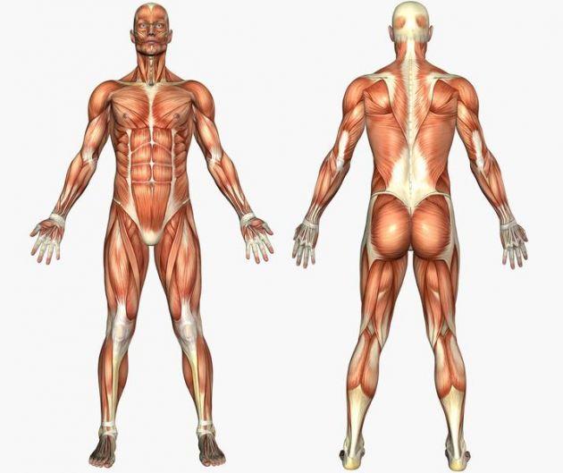 corpo humano - produtividade