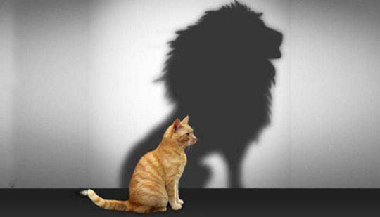 mais autoconfiança por favor