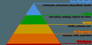 Pirâmide de Maslow: Entenda a Hierarquia das Necessidades Humanas