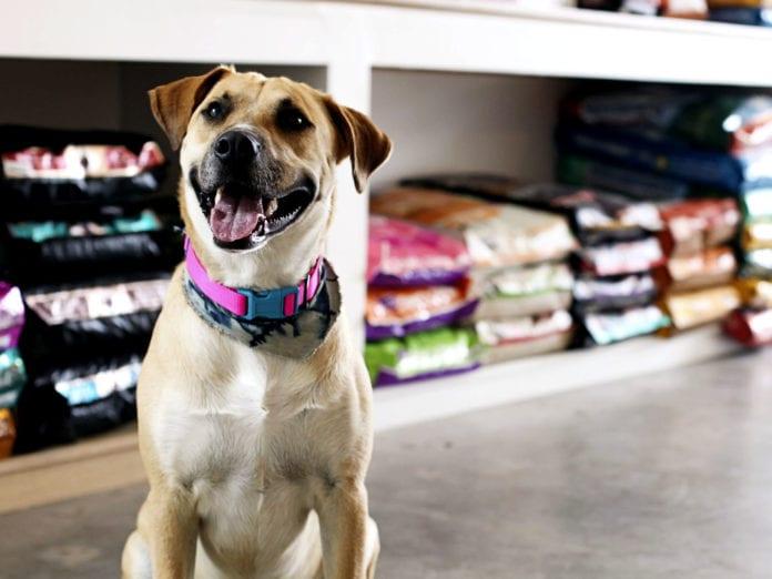 Como montar uma Pet Shop